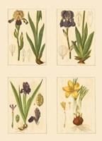 Miniature Botanicals III Fine-Art Print