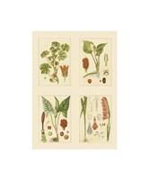 Miniature Botanicals IV Fine-Art Print