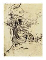 Sepia Tree Study Fine-Art Print