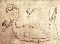 Sepia Swan Study Fine-Art Print