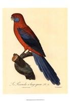 Parrot, PL 78 Fine-Art Print
