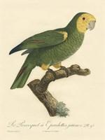 Parrot, PL 98 Fine-Art Print