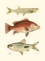 Antique Fish II Fine-Art Print