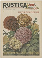Plantez Des Chrysanthemes Fine-Art Print