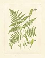 Ferns with Platemark I Fine-Art Print