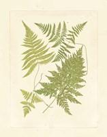 Ferns with Platemark VI Fine-Art Print