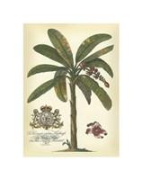 Palm and Crest II Fine-Art Print