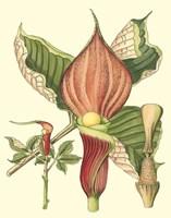 Botanical Fantasy I Framed Print