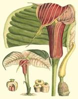 Botanical Fantasy II Framed Print