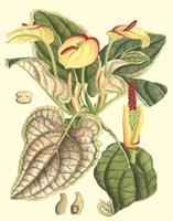 Botanical Fantasy III Framed Print