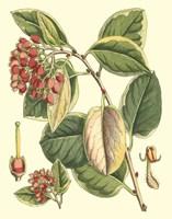 Botanical Fantasy IV Fine-Art Print