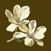 Magnolia on Taupe II Fine-Art Print