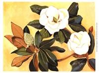 Southern Magnolia I Fine-Art Print
