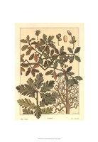 Oak Tree Fine-Art Print