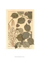 Hazel Tree Fine-Art Print