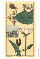Water Lily I Fine-Art Print