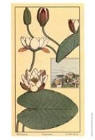 Water Lily II Fine-Art Print