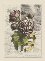 Garden in June I Fine-Art Print