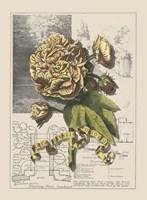 Garden in June II Fine-Art Print