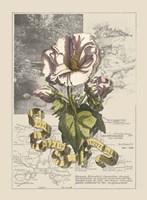 Garden in June III Fine-Art Print