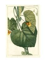 Botanical by Buchoz I (D) Fine-Art Print