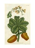 Botanical by Buchoz III (D) Fine-Art Print