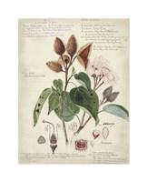 Botanical V Giclee