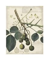 Botanical VI Giclee