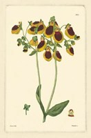 Yellow Curtis Botanical I Fine-Art Print