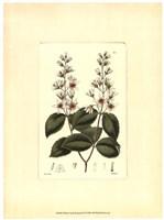 White Curtis Botanical II Fine-Art Print