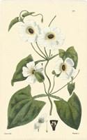 White Curtis Botanical IV Fine-Art Print