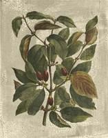 Printed Deshayes Trees II Fine-Art Print