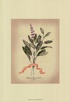 Herb Series I Framed Print
