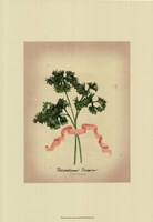 Herb Series II Fine-Art Print