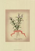 Herb Series III Framed Print
