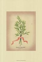 Herb Series V Framed Print