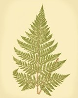 Lowes Fern I (PP) Fine-Art Print