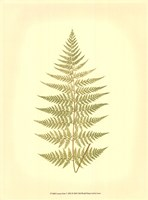 Lowes Fern V (PP) Fine-Art Print