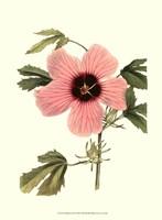 Hibiscus II Fine-Art Print