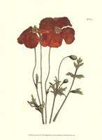 Fiery Florals II Fine-Art Print