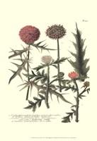 Weinmann, Pl. 315 Fine-Art Print