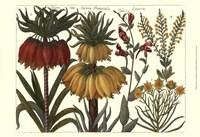 Printed Arena Botanical I Fine-Art Print