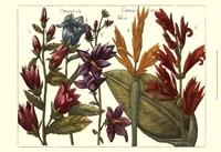 Printed Arena Botanical III Fine-Art Print