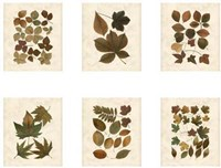 Lodge Leaf Collection Giclee