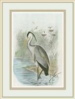 Common Heron Fine-Art Print