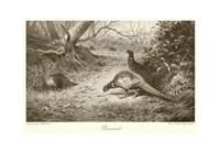 Pheasant Fine-Art Print