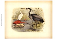 Heron & Ibis Fine-Art Print