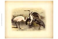 Egret & Heron Fine-Art Print
