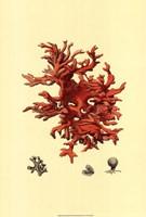 Red Coral (N) III Fine-Art Print