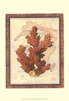 Exotic Map with Coral III (D) Fine-Art Print